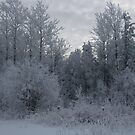 Frosted Trees by Christopher Clark