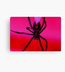 black widow against red background Canvas Print