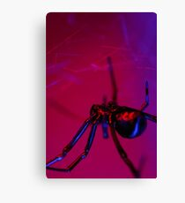 black widow on web Canvas Print