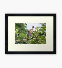 Bird Eating Framed Print
