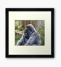 Gorilla Sleeping Framed Print
