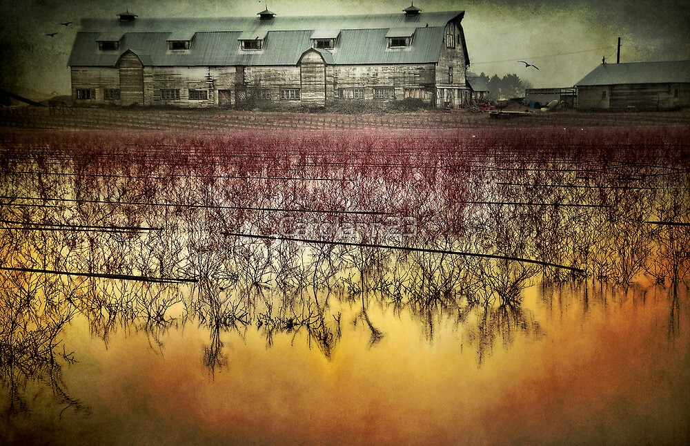 The Flood by Carolann23