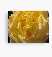 Rose of Remembrance Canvas Print