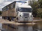 Visy Paper Freightliner Argosy Evolution XDE994 by Joe Hupp