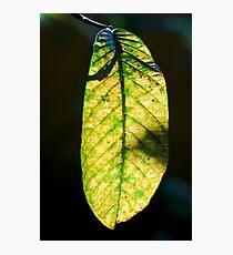 Light on Photographic Print