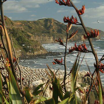 West Coast North Island by taterbug