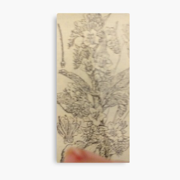 paint echium vulgare L. Metal Print