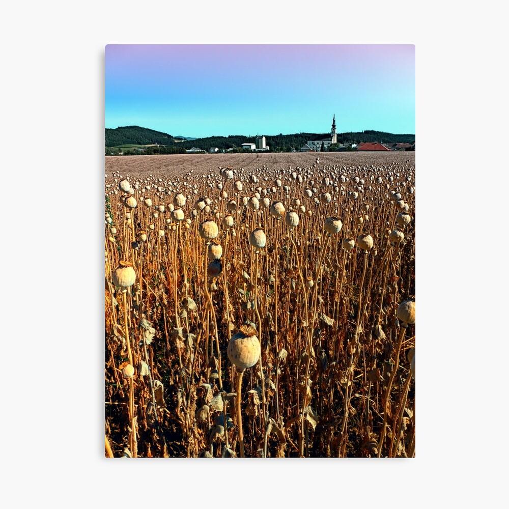 Poppy fields with a sunburn Canvas Print