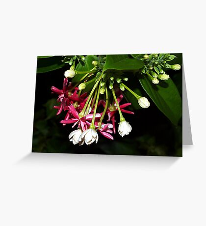 Flowers on a tropical vine Greeting Card