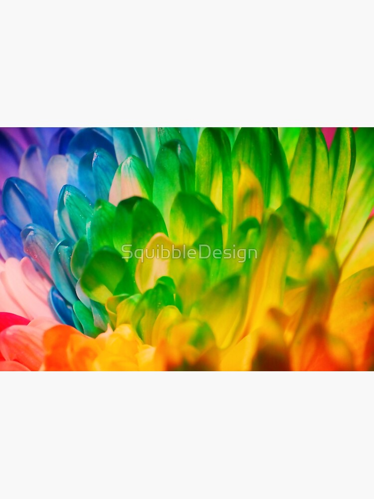 Rainbow Flower #1 by SquibbleDesign