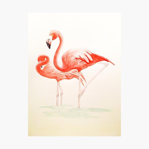 flamingo couple Photographic Print