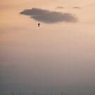 traveling bird by Daphne Kotsiani