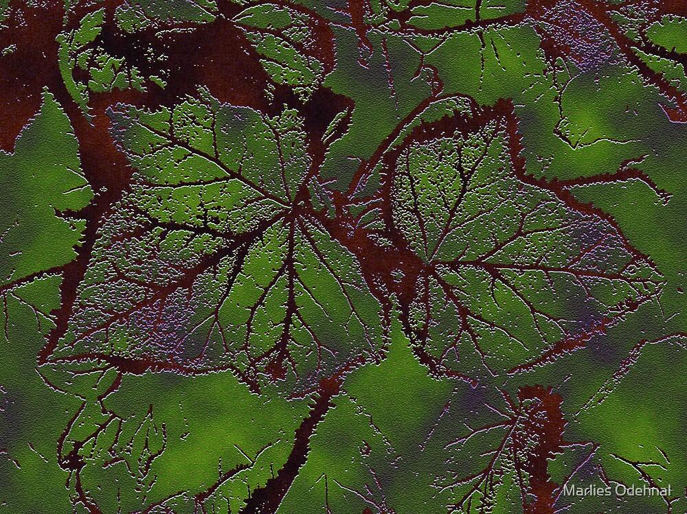 autumn leaf by Marlies Odehnal