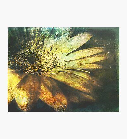 A Floral Symphony Photographic Print