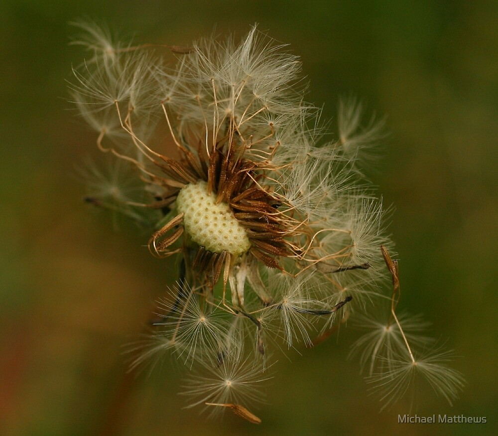 Blowing in the wind by Michael Matthews