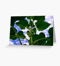 Uplifted, sunflower teaching for the sky Greeting Card