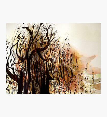 black tree wood.... vague dream Photographic Print