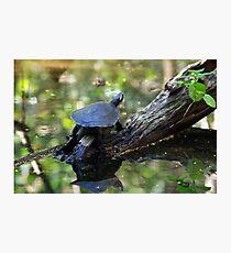 Brown turtle Photographic Print