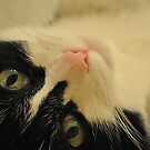 My Pretty Pink Nose by Jessica Snyder