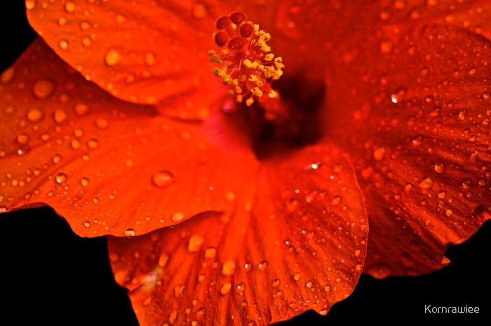 Shiny raindrops on her cheek... by Kornrawiee