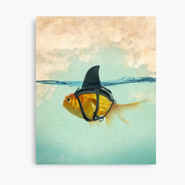 brilient disguise, goldfish with a shark fin Canvas Print