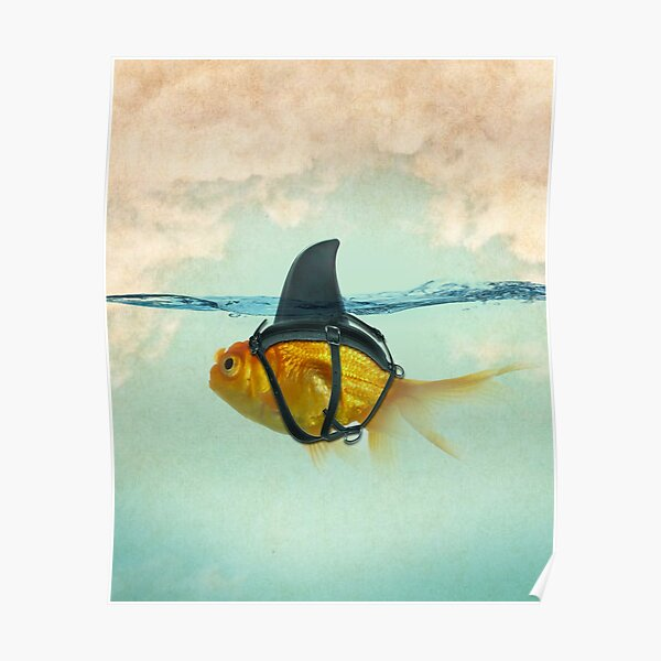 brilient disguise, goldfish with a shark fin Poster