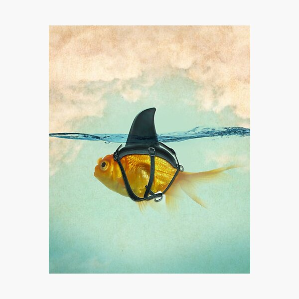 brilient disguise, goldfish with a shark fin Photographic Print