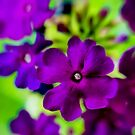 Psychedelic Purple  by Kasia-D