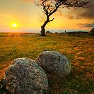 The single tree @ Dog Rocks Geelong: Summer by Ray Yang