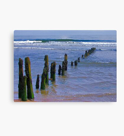Old Groynes at Sandsend. Canvas Print