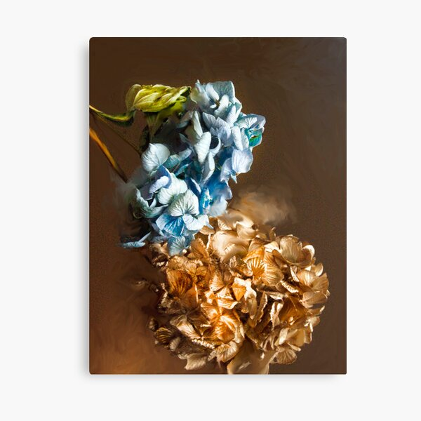 Gold and Blue Hydrangeas Canvas Print
