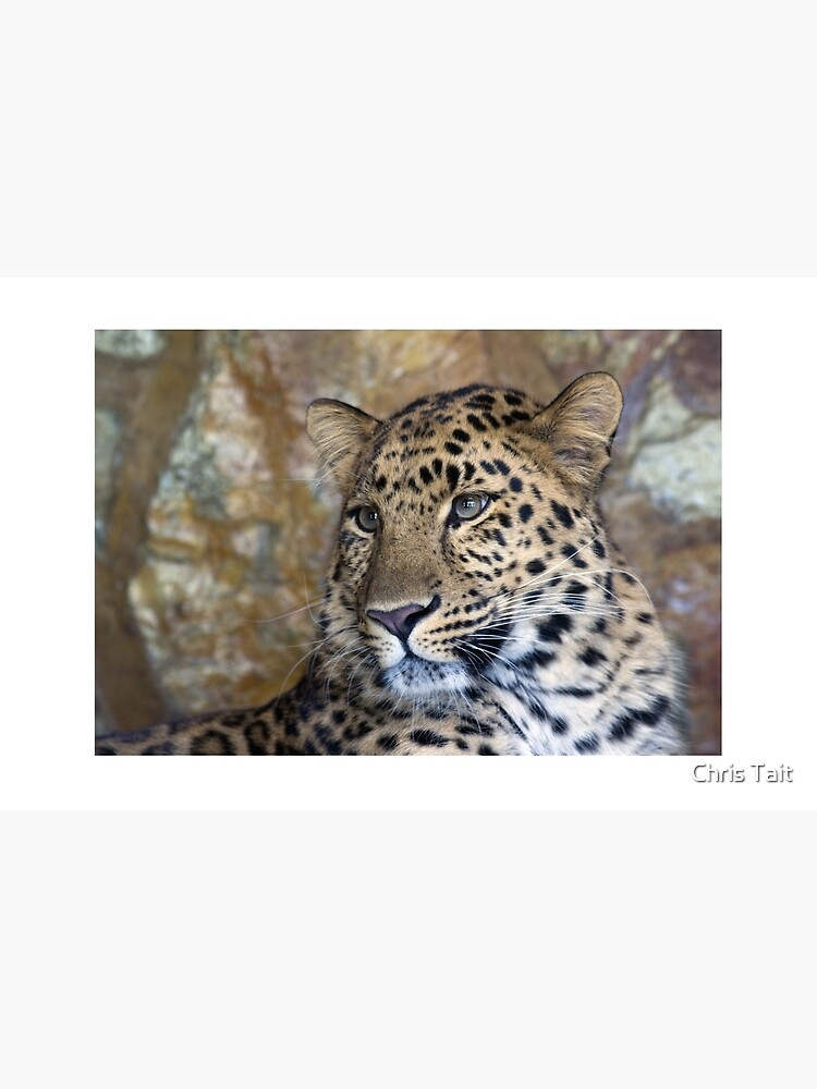leopard  by christait