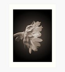Blooms in Black and White 2 Art Print