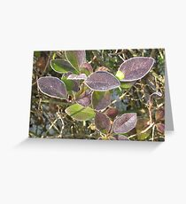 Frozen Leaves - Two Greeting Card