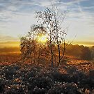Golden Glow by relayer51