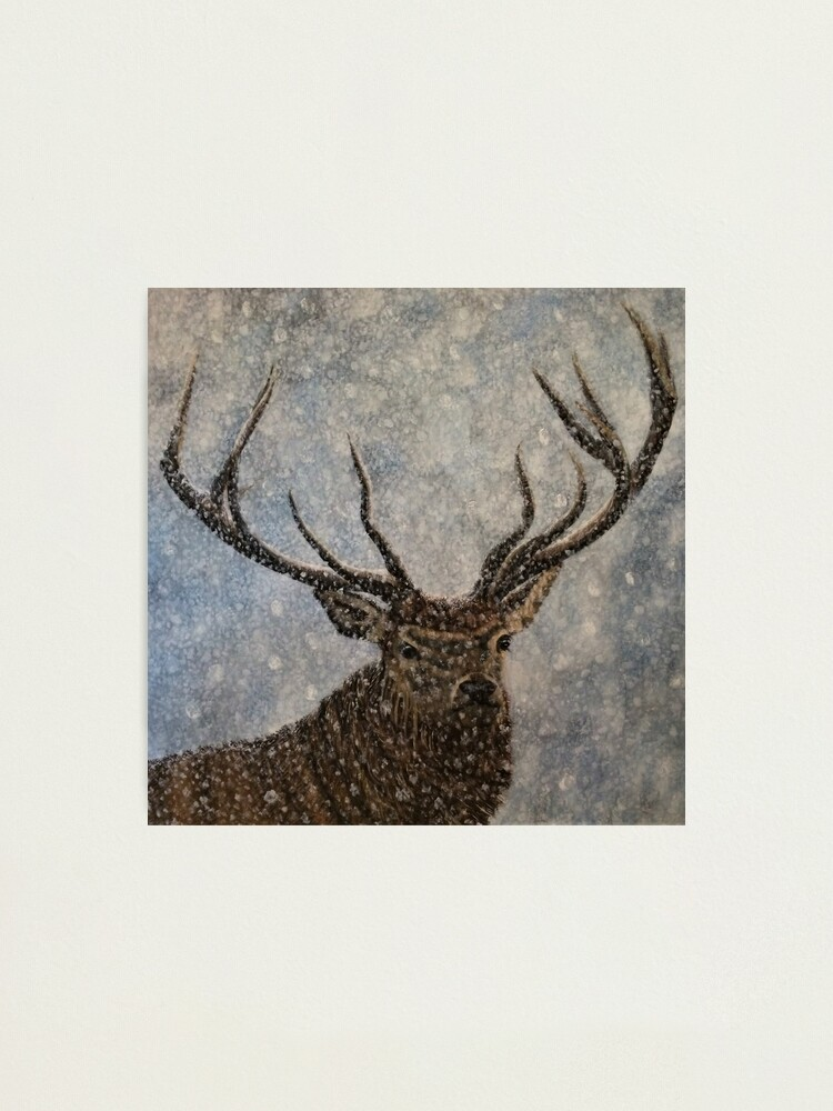 Alternate view of Not Afraid of the Snow - Stag in Snow - Wall Art Photographic Print