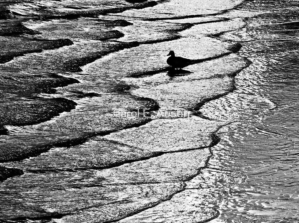Ocean Surf Beach Scene in Black and White by Carol F. Austin