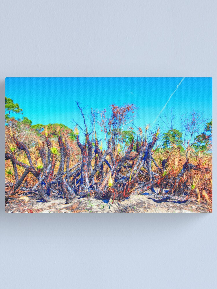 Alternate view of Meteor Fire Canvas Print