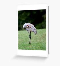 Sandhill Crane Grooming Greeting Card