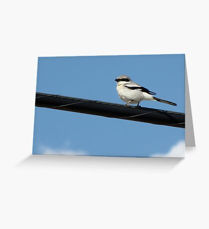 Loggerhead Shrike ~ Marana, Az Greeting Card