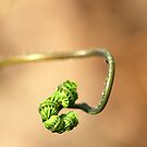 Life Unfurling by aussiedi