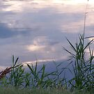Reeds by leesm19