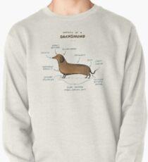 Anatomie d'un teckel Sweatshirt