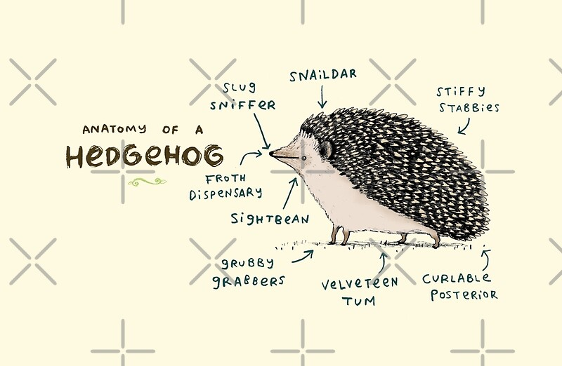 Quot Anatomy Of A Hedgehog Quot Laptop Skins By Sophie Corrigan