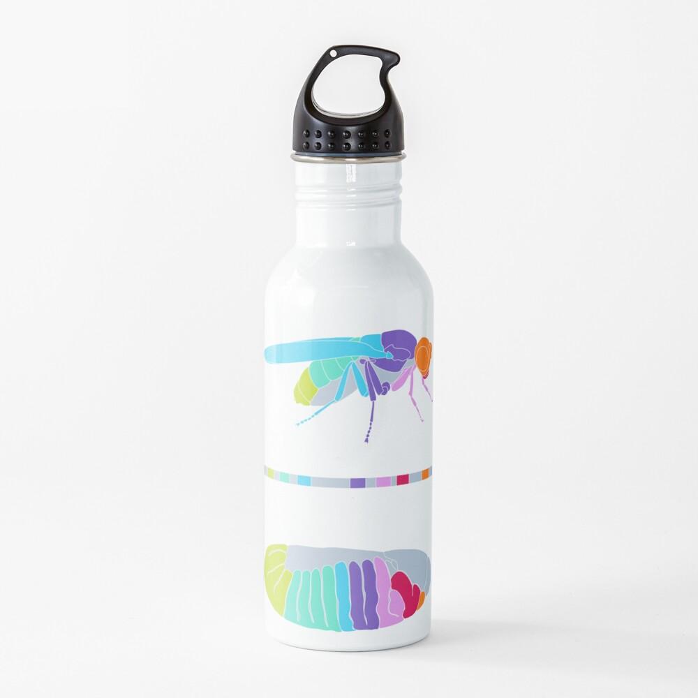 Drosophila Hox Genes  Water Bottle
