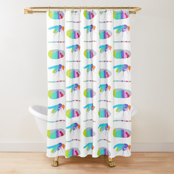 Drosophila Hox Genes  Shower Curtain