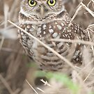 """Burrowing Eyes"" - burrowing owl in Cape Coral, Florida by ArtThatSmiles"