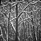 A Walk In The Woods by Jay White