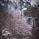 Winter Storm by Jay White