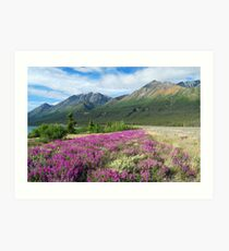 When it's Spring Time - Yukon Territory ` Canada Art Print